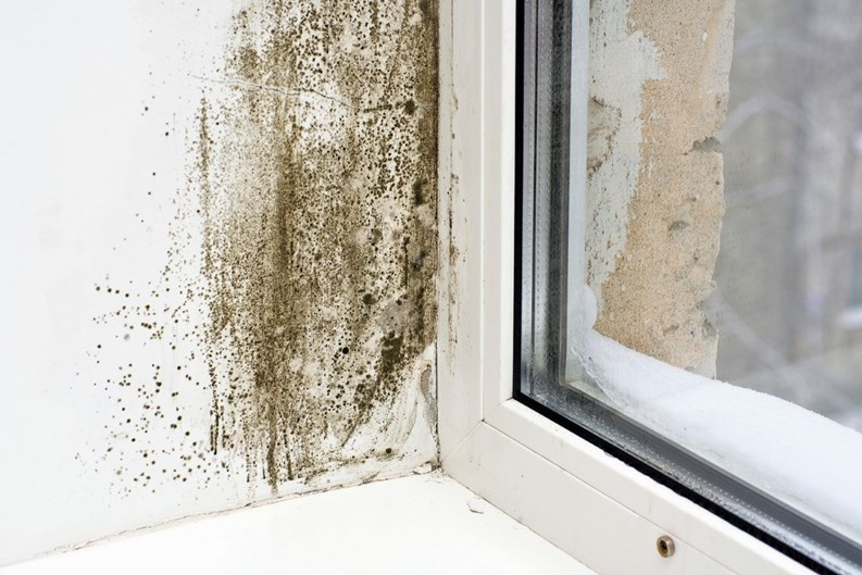 When You Have Mold-Who Pays? - Household Hazards! - New